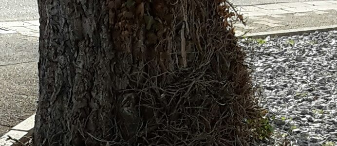Das Für und Wider einer Baumschutzsatzung
