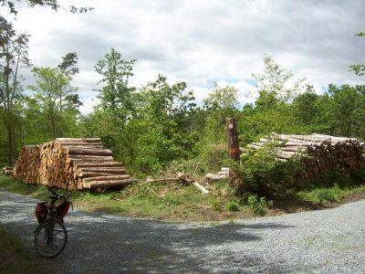 Waldgebit mit Baumschäden und Holzstapeln