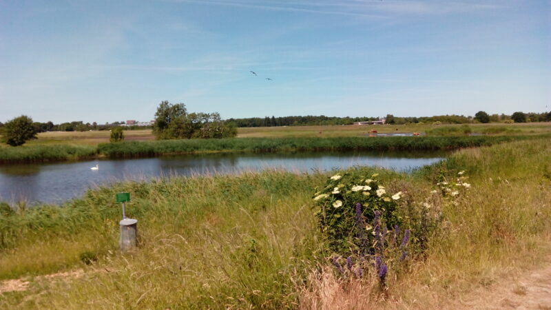 Südlich von Kopenhagen ist das Naturschutzgebiet Kalvebod Faelled