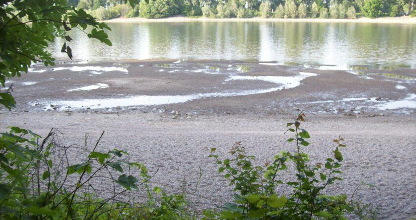 Der Rhein nahe Worms hat Niedrigwasser im Juni 2020