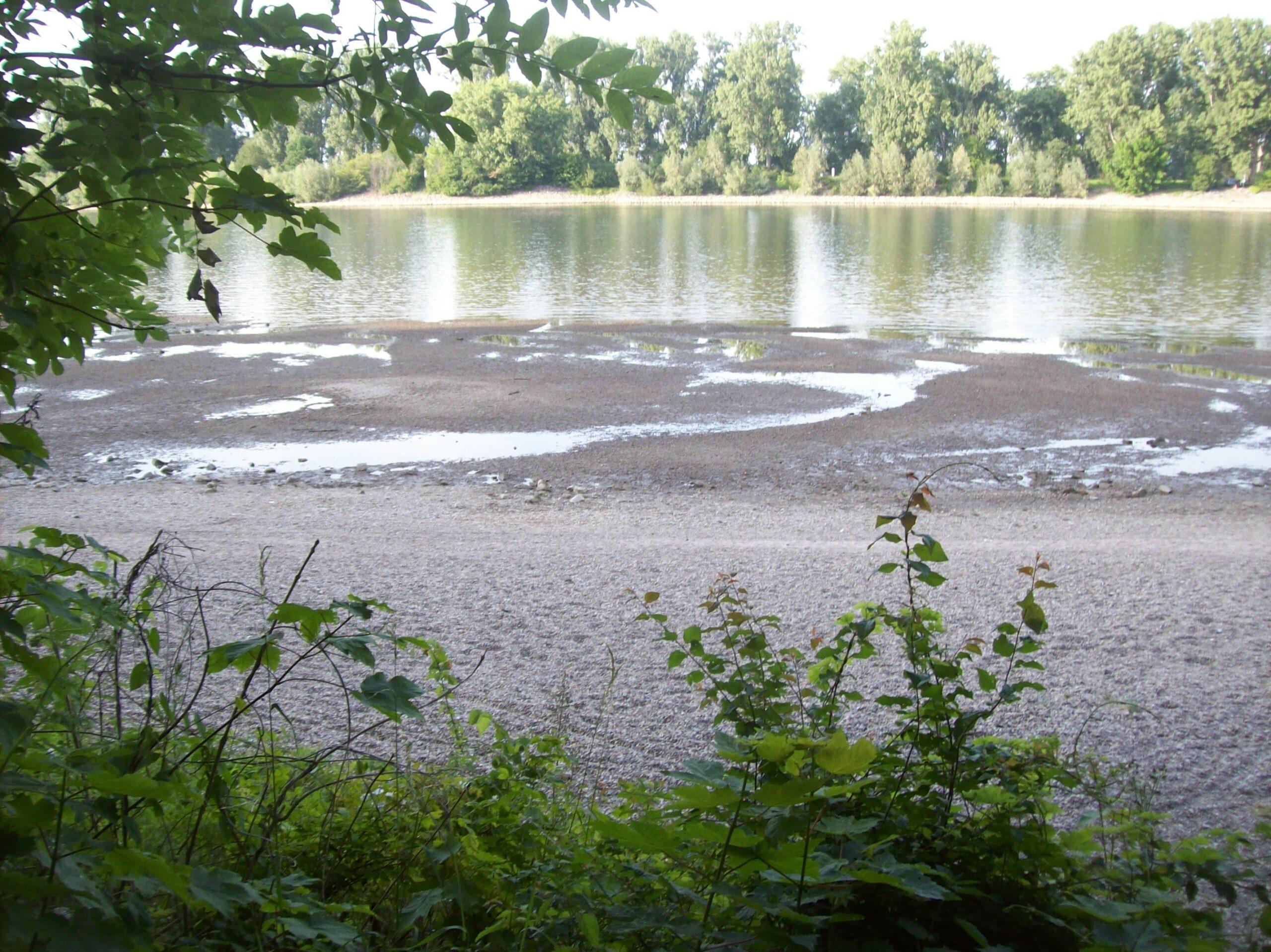 Der Rhein nahe Worms hat Niedrigwasser im Mai 2020